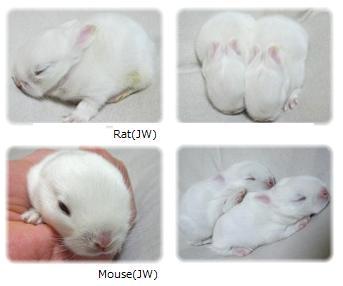 rat&mou-11-1.jpg