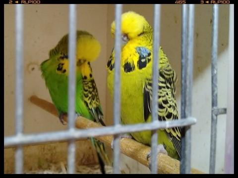 Fotor_158996465526191.jpg